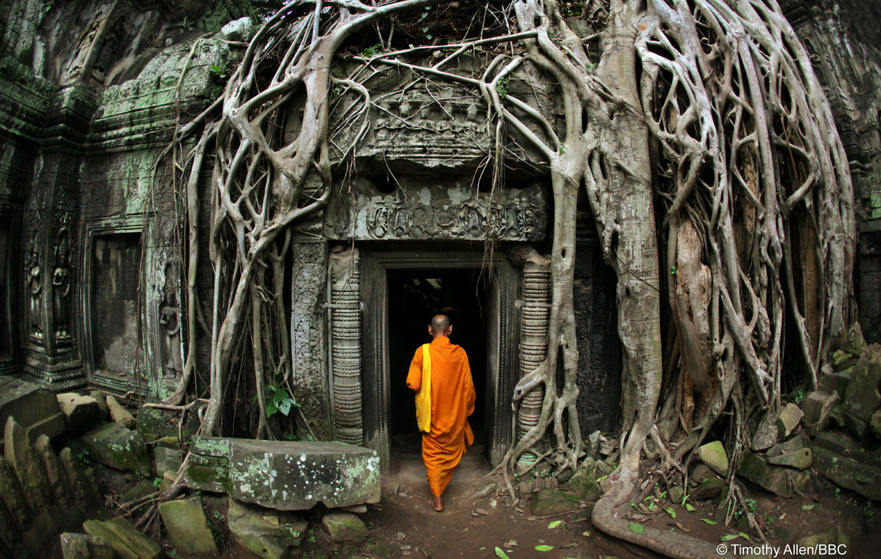 Jungles / Temple at Angkor Wat, Cambodia by © Timothy Allen/BBC - from Human Planet