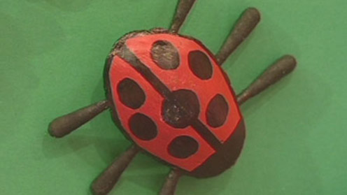 Ladybird spoon bug