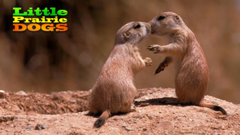 Little Prairie Dogs