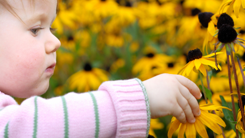 A picture of a child and a sun flower