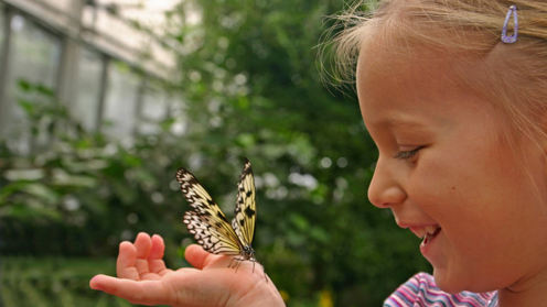 Girl smiling at butterfly on hand