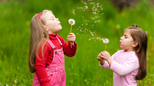 Girls blowing dandelion florets