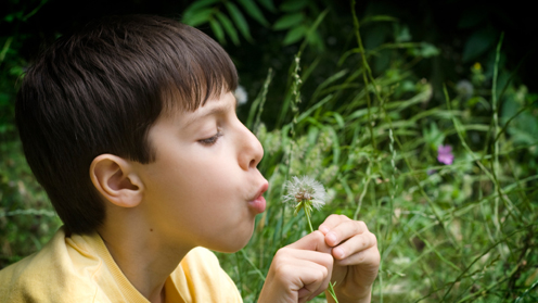 Boy blowing dandelion florets