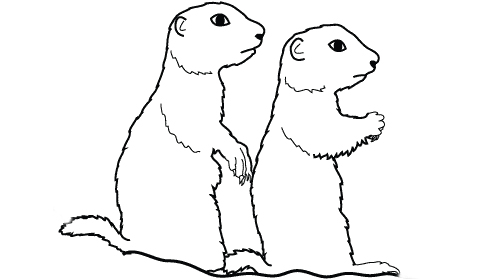 Little Prairie Dogs prints